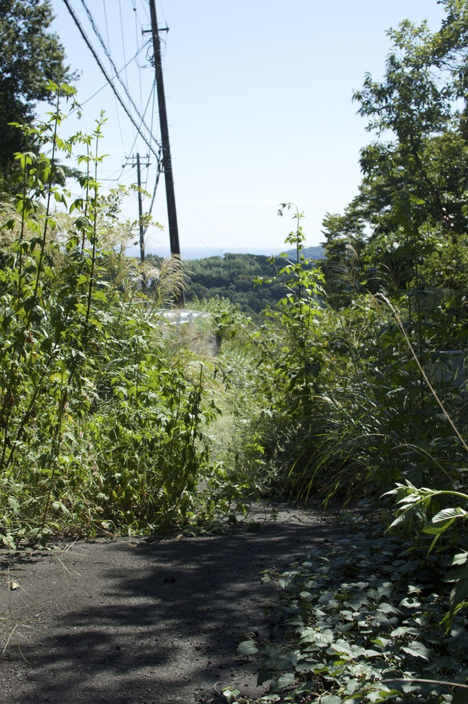 An asphalt road almost overgrown with weeds