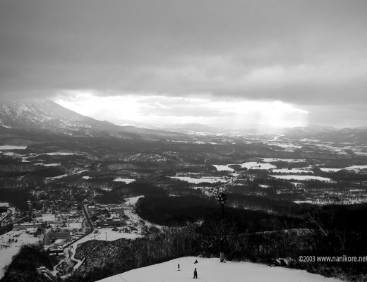 22003 Niseko Low Snow Tree