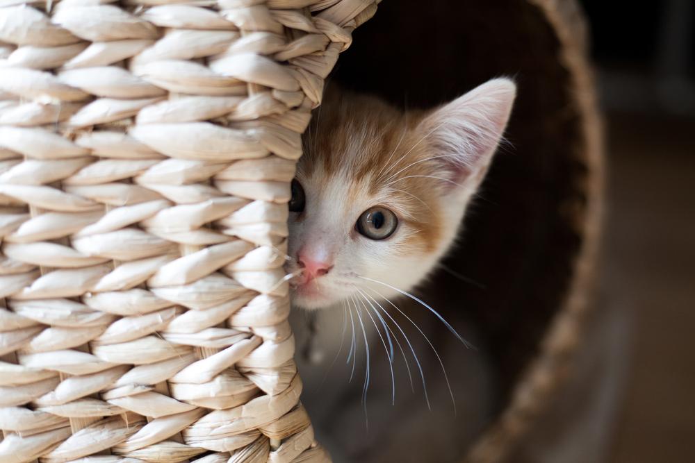 688f3788d08b Παιδί και γάτα  κάνοντας αυτή τη σχέση να ανθίσει! - Nannuka Blog
