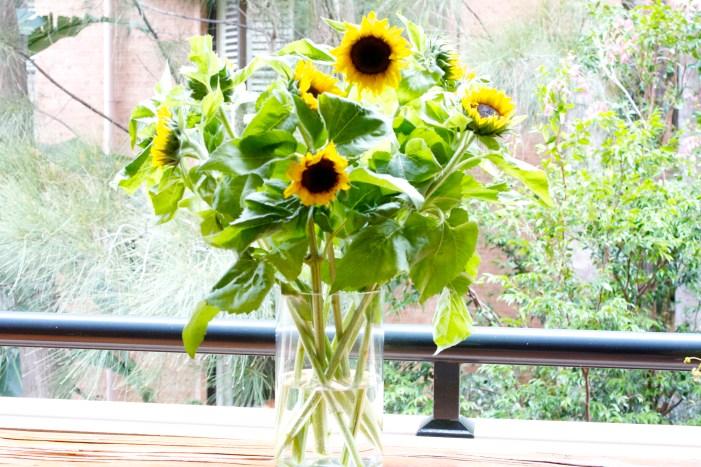 sunshine, sunflowers, weekend, markets, rut, happy, nannyshecando