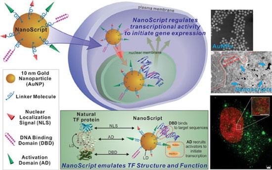Nanoscript