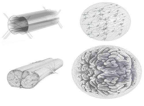 3-D Neural Tissue Construct Designs