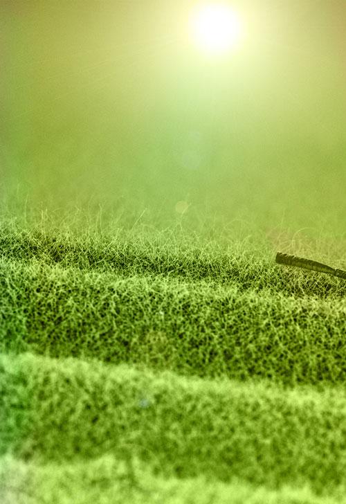 Grassland Sunrise nano-image