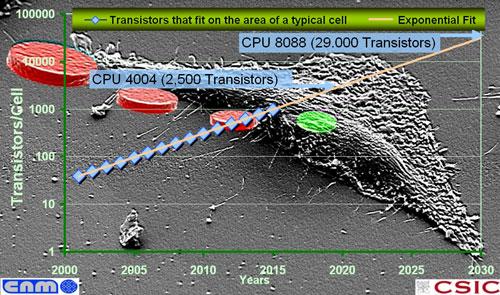 Imagistica TEM de absorbtie nanoparticule de carbon de Allium cepa de celule de plante