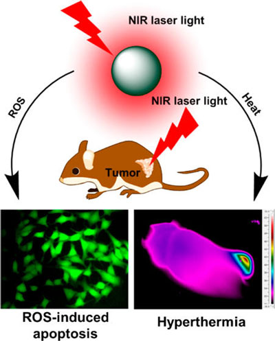 Near-Infrared Photothermal and Photodynamic Therapeutics