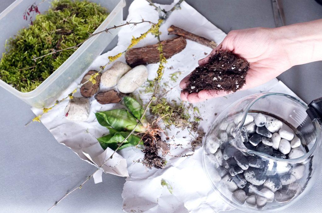 jak zrobić terrarium