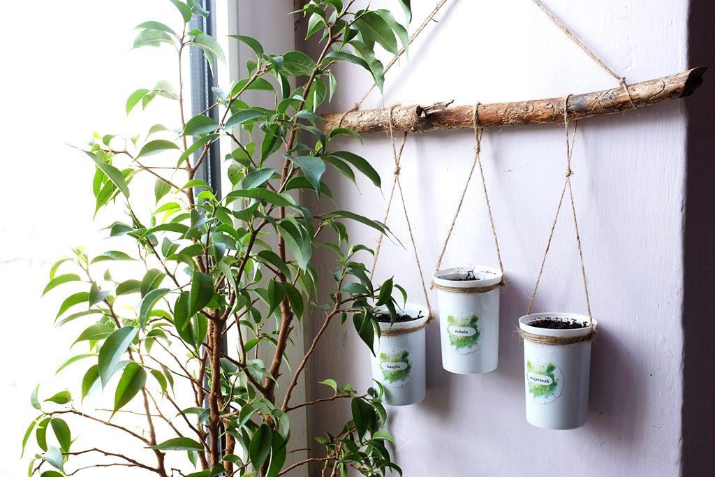ogródek na parapecie