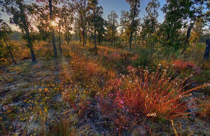 Autumn wildflowers at sunrise