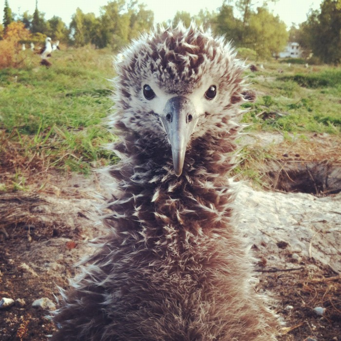 Midway Atoll, Photographed with an iPhone