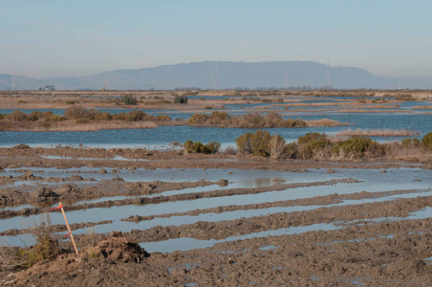 Cullinan Ranch, 6 hours after levees were breached to help restore a tidal marsh environment.