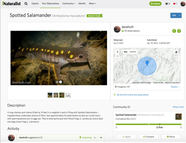 iNaturalist, one of a number of nature documentation apps, doesn't require perfect photos — just clear enough to ID, along with some basic information such as location.