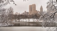 Snow-covered branches frame urban landscape of Central Park, New York, NY.