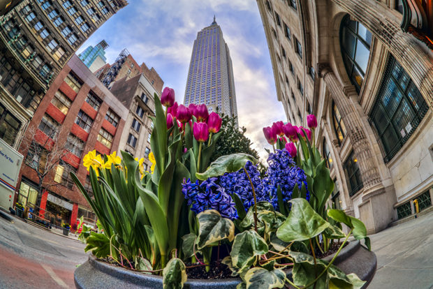 Leading lines to a flower display in Midtown Manhattan. (HDR compilation of 5 images.)
