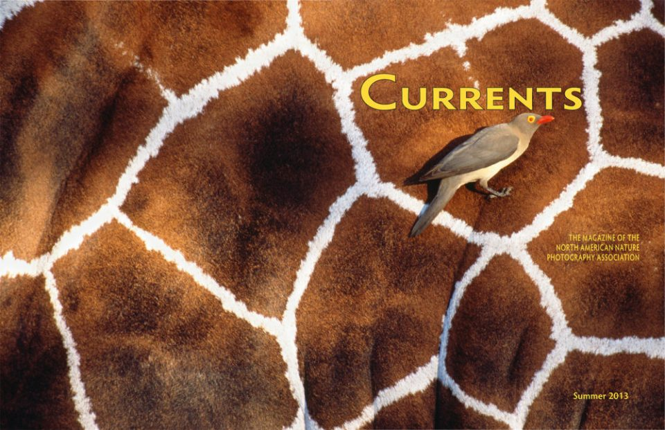 2013 Currents Summer Cover