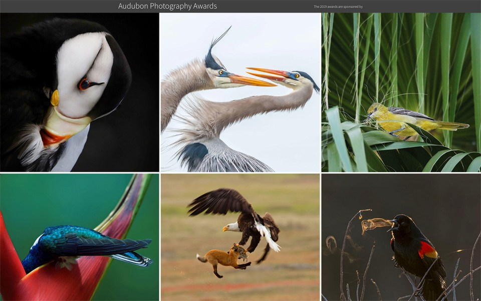 Winning photos in the Audubon Awards were recently announced.