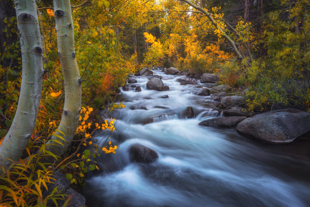 "Showcase 2019 Top 100 winner: ""Colorful Fall Leaves Along Bishop Creek,"" Bishop Creek, Inyo County, California © Ian S. Frazier."