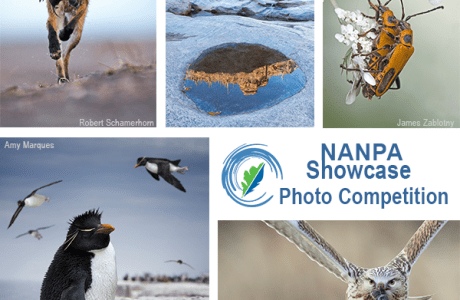 Time to get your entries ready for NANPA's 2020 Showcase Competition.
