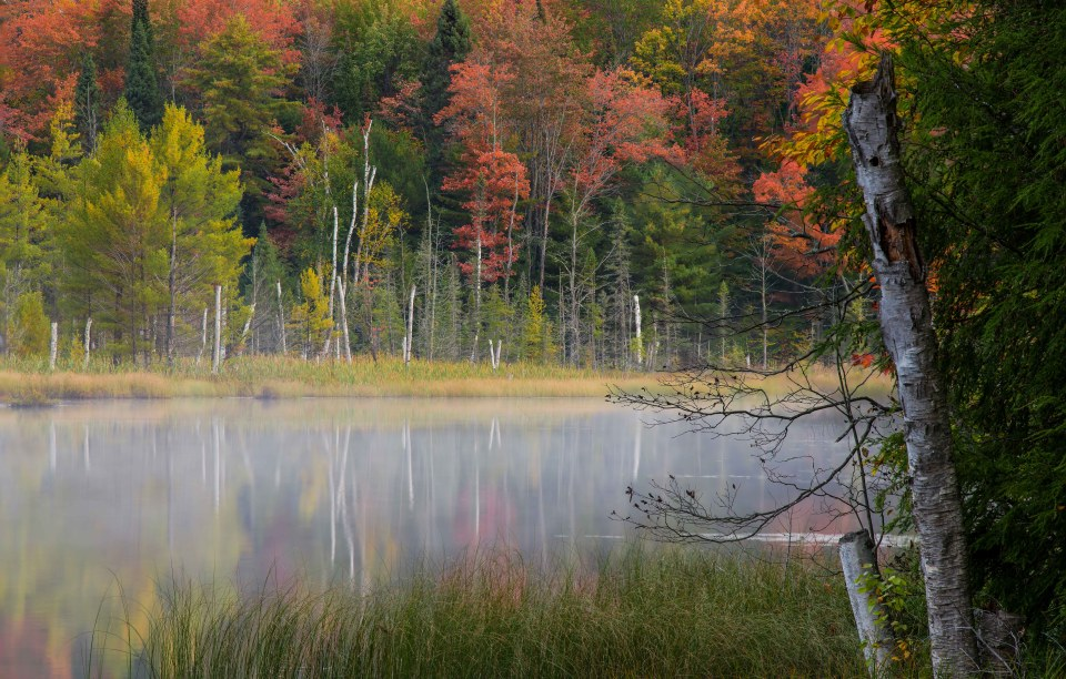 Colorful fall foliage in the UP.
