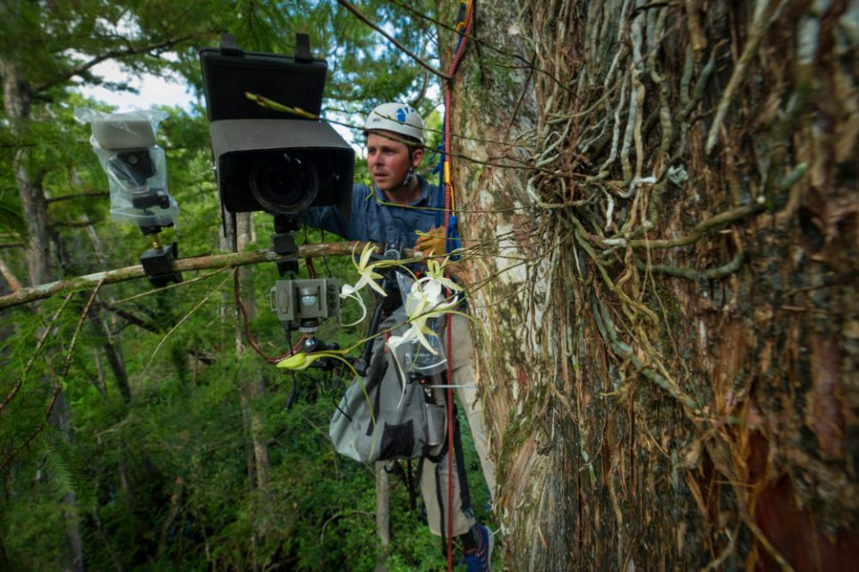 Mac Stone working on his camera trap high in the tree canopy.  Photo by Peter Houlihan.