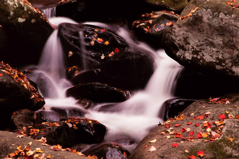 The Roaring Fork Motor Nature Trail is a narrow road through a calm and serene area of wilderness located right alongside bustling Gatlinburg, TN. Rushing mountain streams punctuate the landscape.
