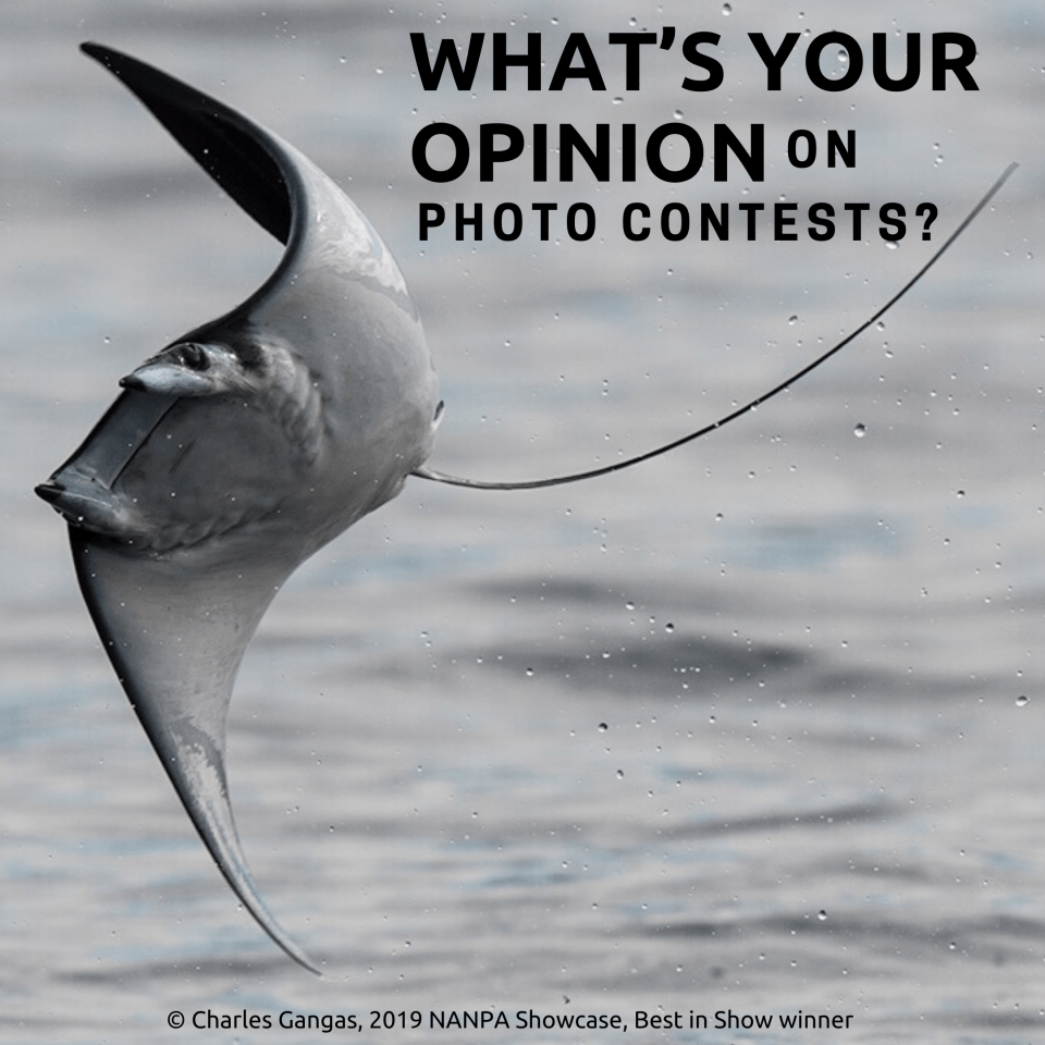 Photo of manta ray and invitation to help NANPA understand what you value in photo contests.