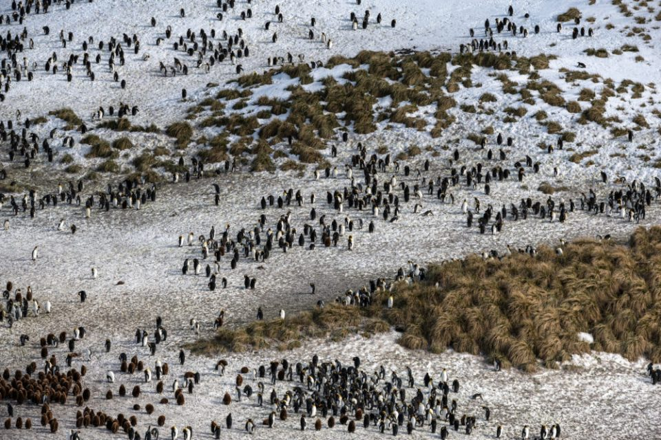 Penguin colony at Elsehul.