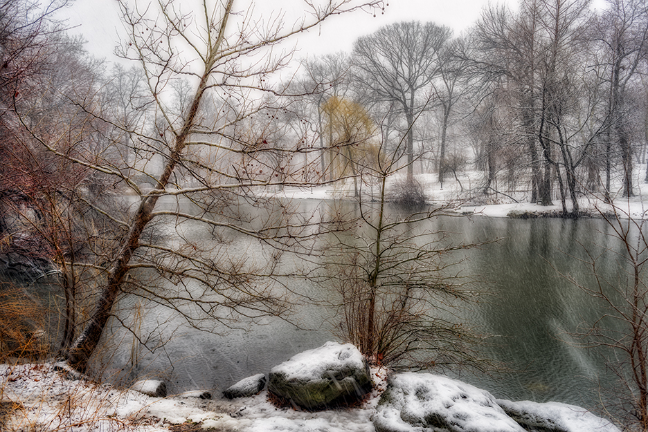 Trees and pond in snow. Color can still be found even at the height of a raging storm.
