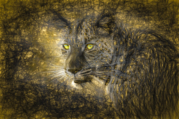 """2020 Showcase, Best in Show, Altered Reality: """"Out of the Shadows - African Leopard, Kruger National Park, South Africa"""" © Dennis Fast."""