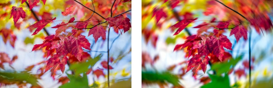 Maple leaves (unaltered) on the left and maple leaves with radial blur (spin method) applied on the right.
