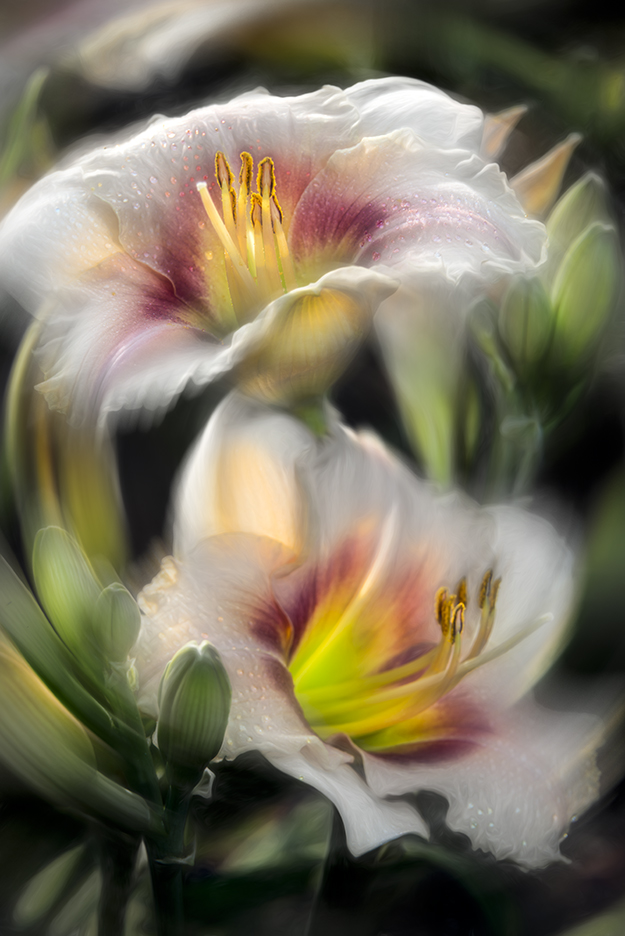 Daylilies with Radial blur filter (spin method) applied