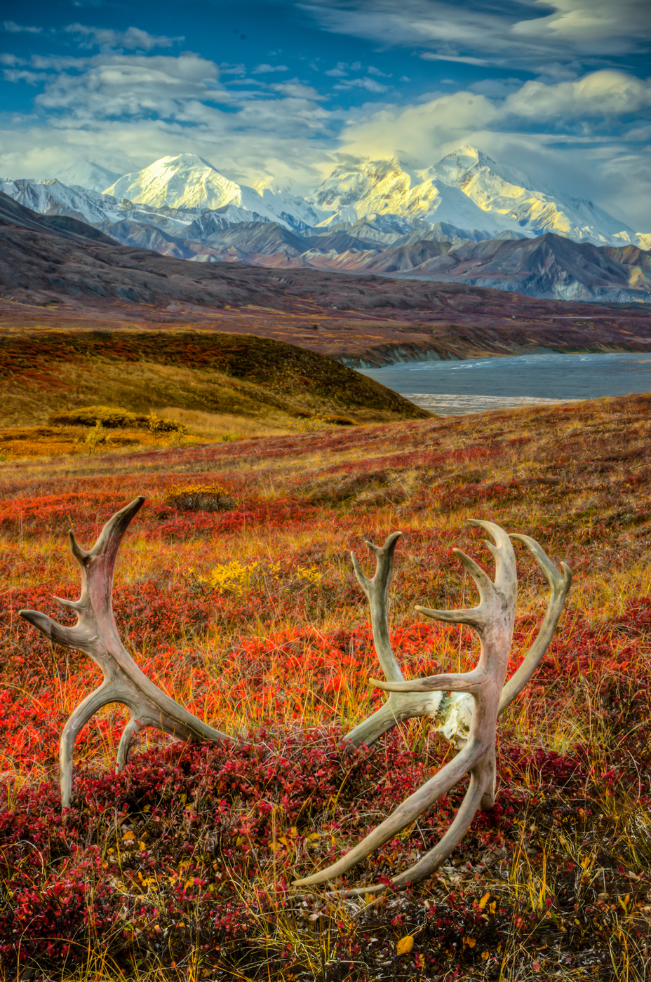 Caribou antlers and tundra in front of Mt. Denali (formerly known as Mt. McKinley).