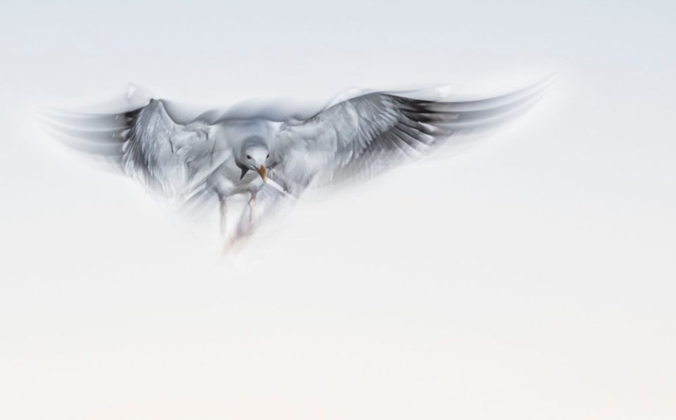 "Showcase 2020 Top 100 winner: ""Gull Emerging From Fog at Dawn"" © Leonard James."