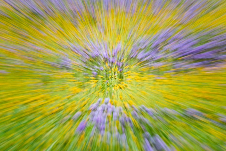 Creative zoom effect on a field of flowers.