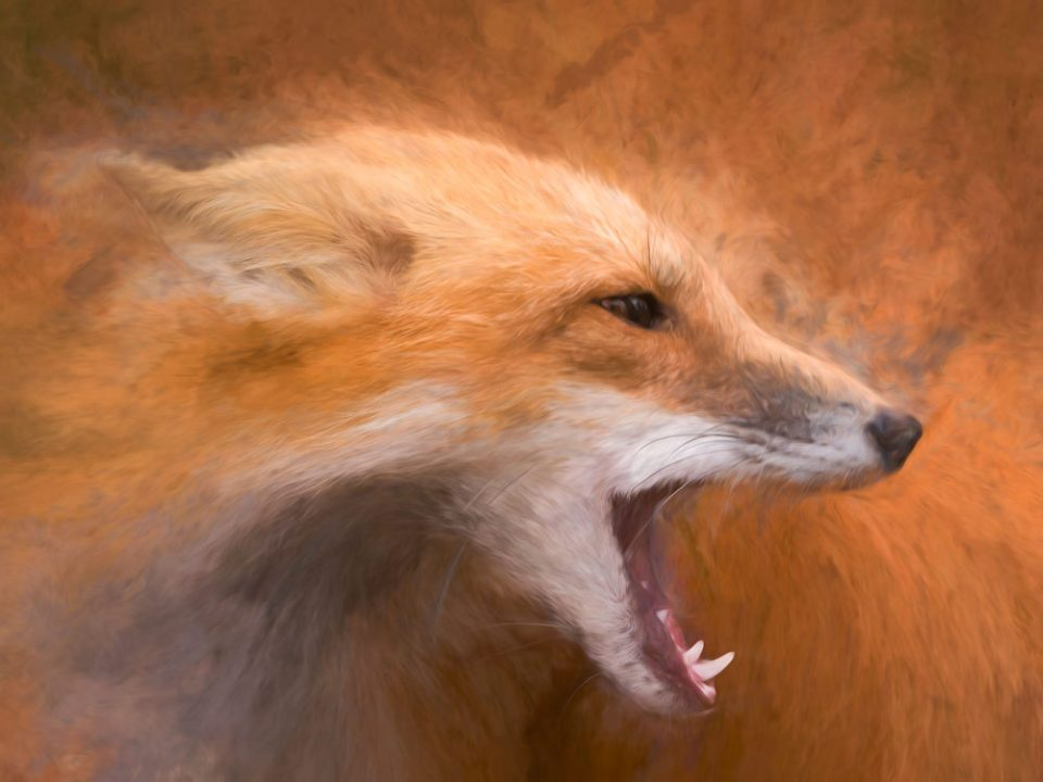 "Showcase 2020 Top 100 winner: ""An Abstract Image of a Red Fox Calling in the Wilderness"" © Ron Day."