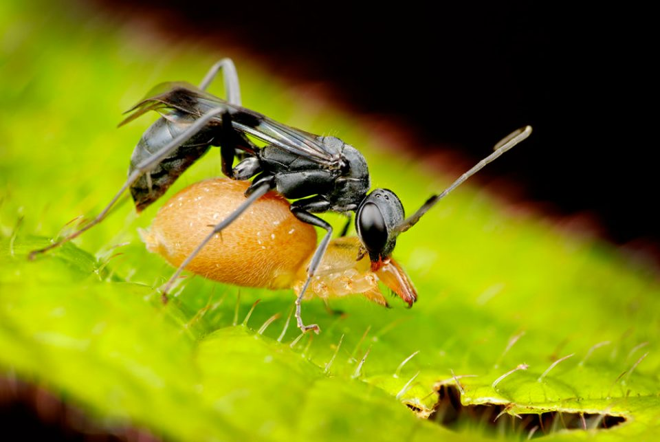 "Showcase 2020 Top 100 winner: ""Spider Wasp with Spider"" © Tom Myers"