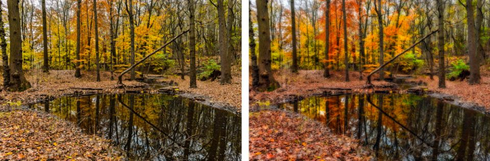 Original image  of a pond in the woods during fall was shot at f/16 at 24mm on the left and with  Gaussian blur filter applied on the right.