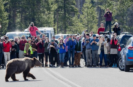 "Showcase 2020 Judges' Choice, Conservation: ""Grizzly 399 Attempts to Cross the Road"" © Jennifer Leigh Warner"