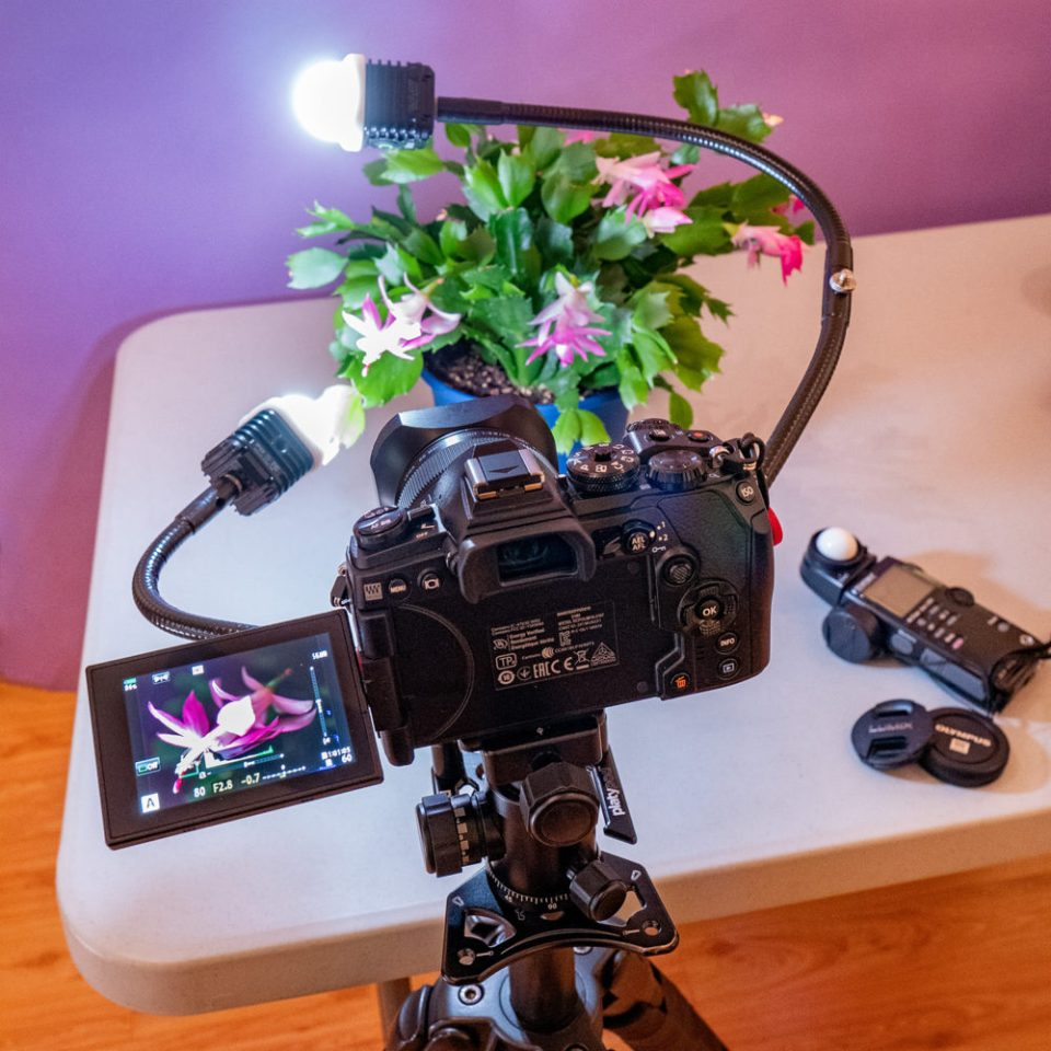 A Platypod Ultra shown mounted on a tripod with two gooseneck arms supporting a pair of Litra LED lights. © Bob Coates