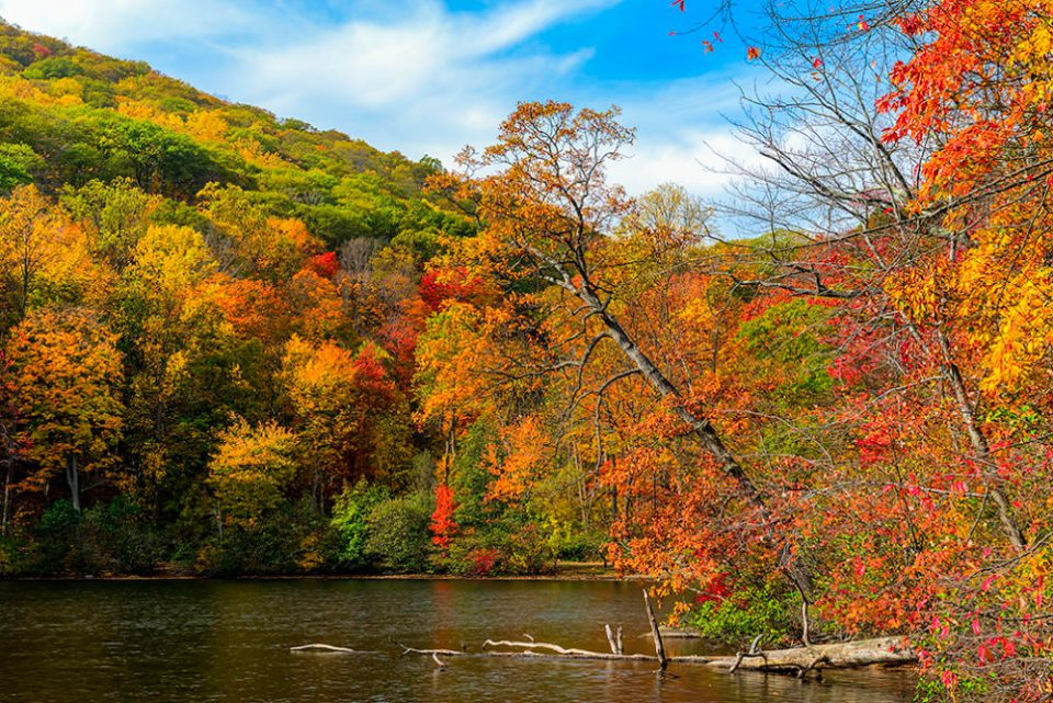 "Photo of autumn foliage along a lake. ""Bear Mountain State Park Autumn Scene in Direct Sunlight,"" © F.M. Kearney"