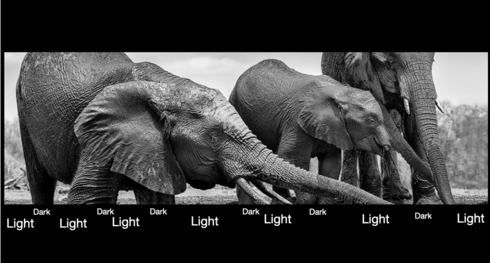 Annotated photo of elephants drinking. Elephants Drinking. Here, I've simplified how this works. If you change an image to B&W you can readily see the changing tonal values. Go to the top of this image and see the same thing happening. © Donna Brok