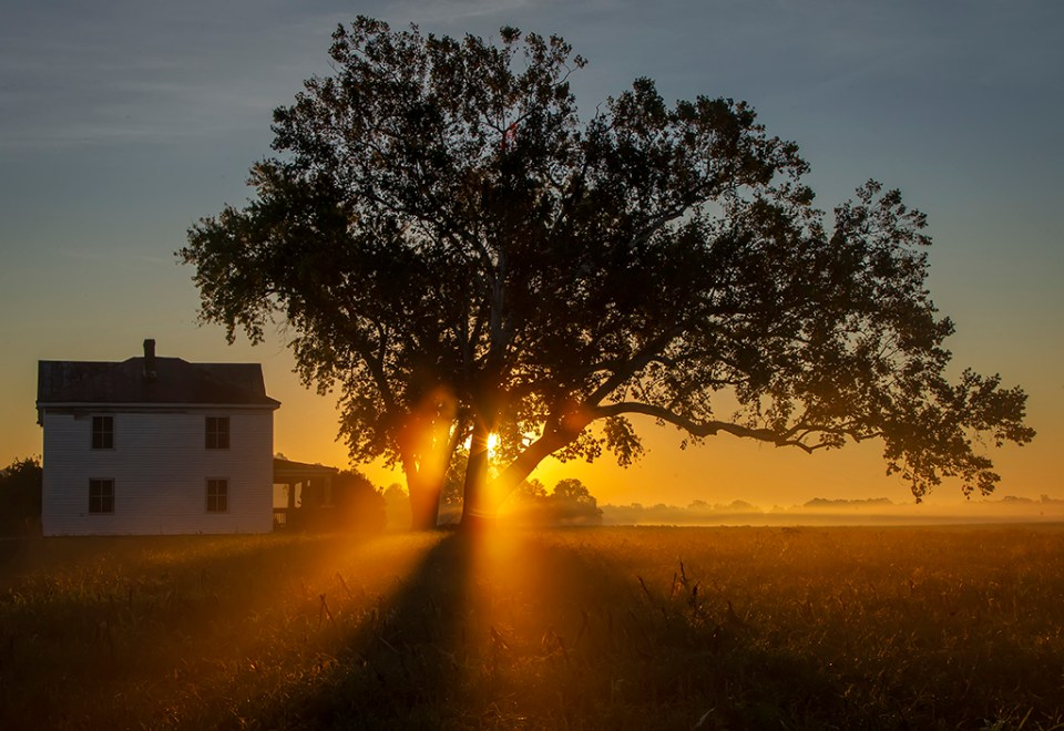 Sunrise Through the Old Tree, image by Barbara Houston