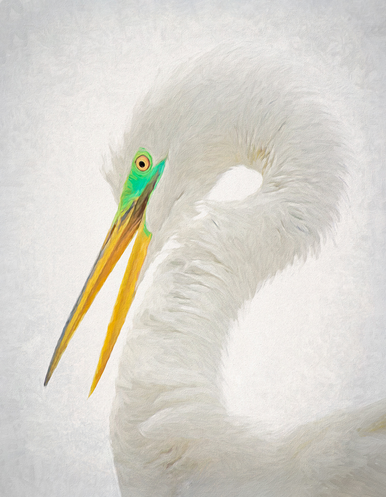 Painterly High Key Image of a Great Egret Displaying Breeding Colors by Ron Day