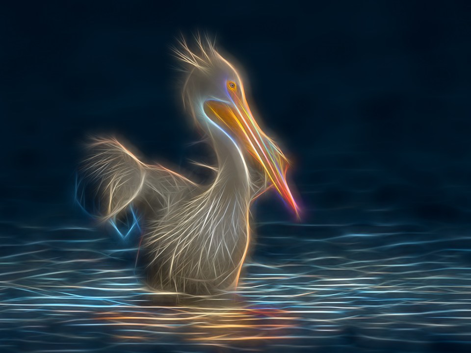 Altered reality image of a pelican by Ron Day