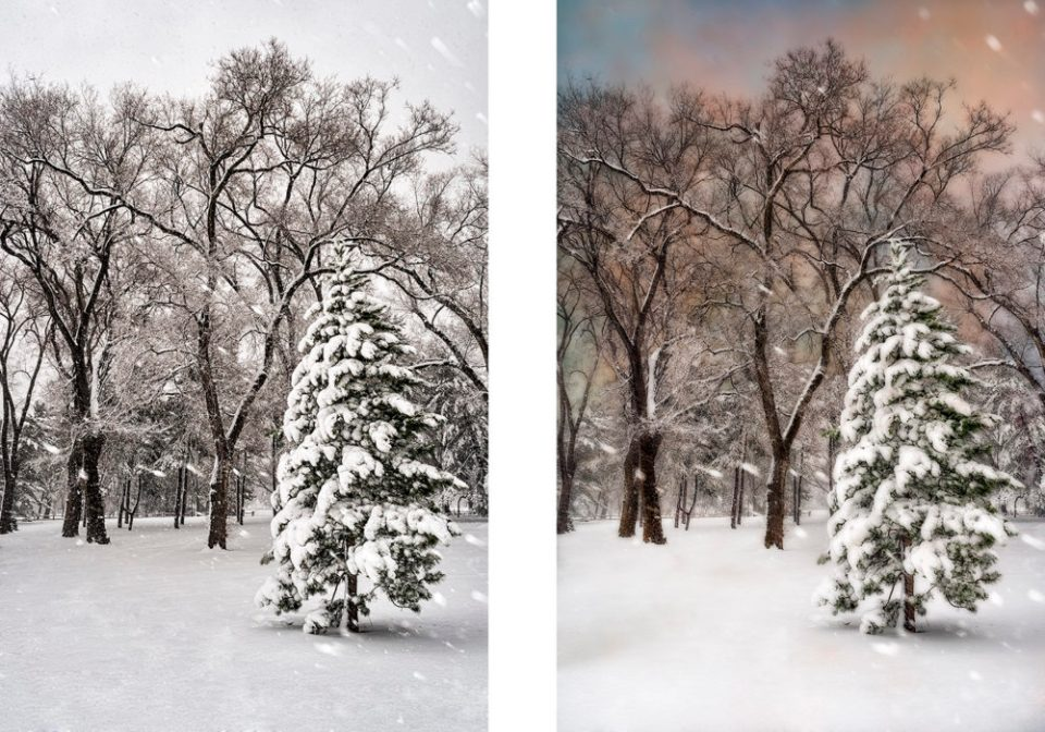 Snow-Covered Trees at the Arthur Ross Pinetum during Snowstorm  © F.M. Kearney