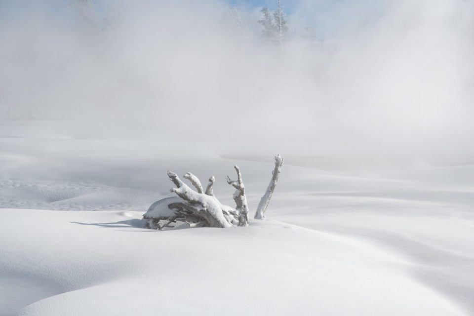 Photo of a snow-covered stump sticking up from a blanket of snow. Yellowstone Stump © Debbie McCulliss