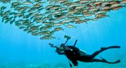 """Discovering what lies beneath"" a photo of an underwater photographer swimming under a school of fish. © Jim Squires"