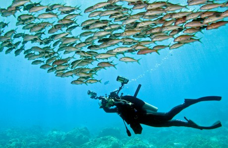 """""""Discovering what lies beneath"""" a photo of an underwater photographer swimming under a school of fish. © Jim Squires"""