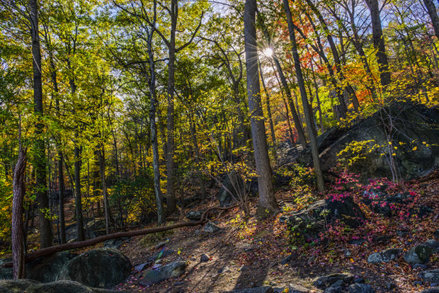 Fall foliage in Bear Mountain State Park Bear Mountain, NY (HDR compilation of 5 images)