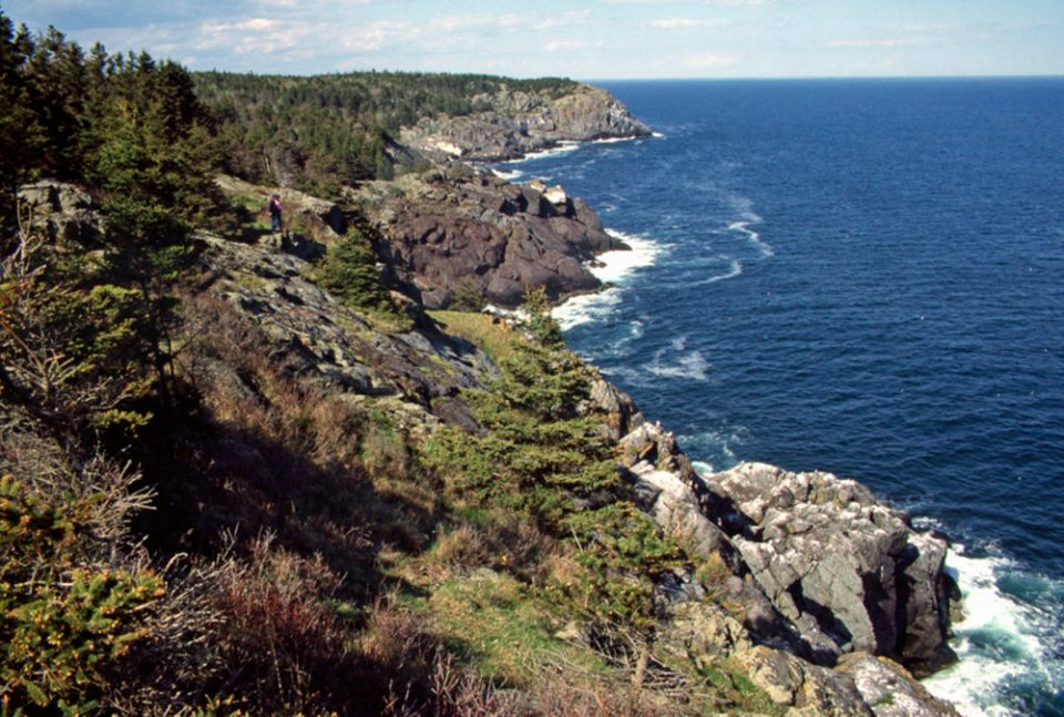 Monhegan's headlands provide perfect vantage points for spotting seabirds. © Budd Titlow