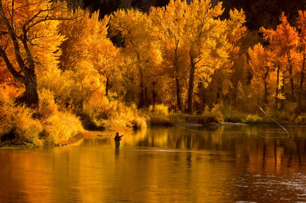 IDAHO, MAIN SALMON RIVER, Fly fisherman spey casting for steelhead trout in falls golden light, near North Fk., ID